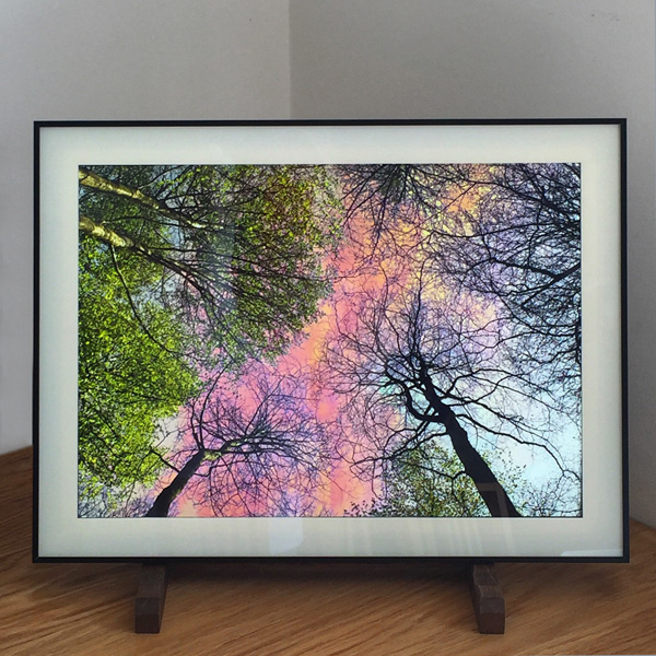 'Forest Sky' series mock-up Lightbox