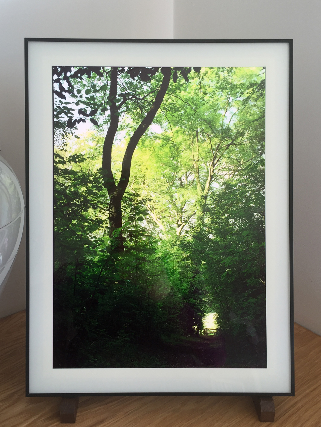 'In the Forest' series mock-up Lightbox for discussion